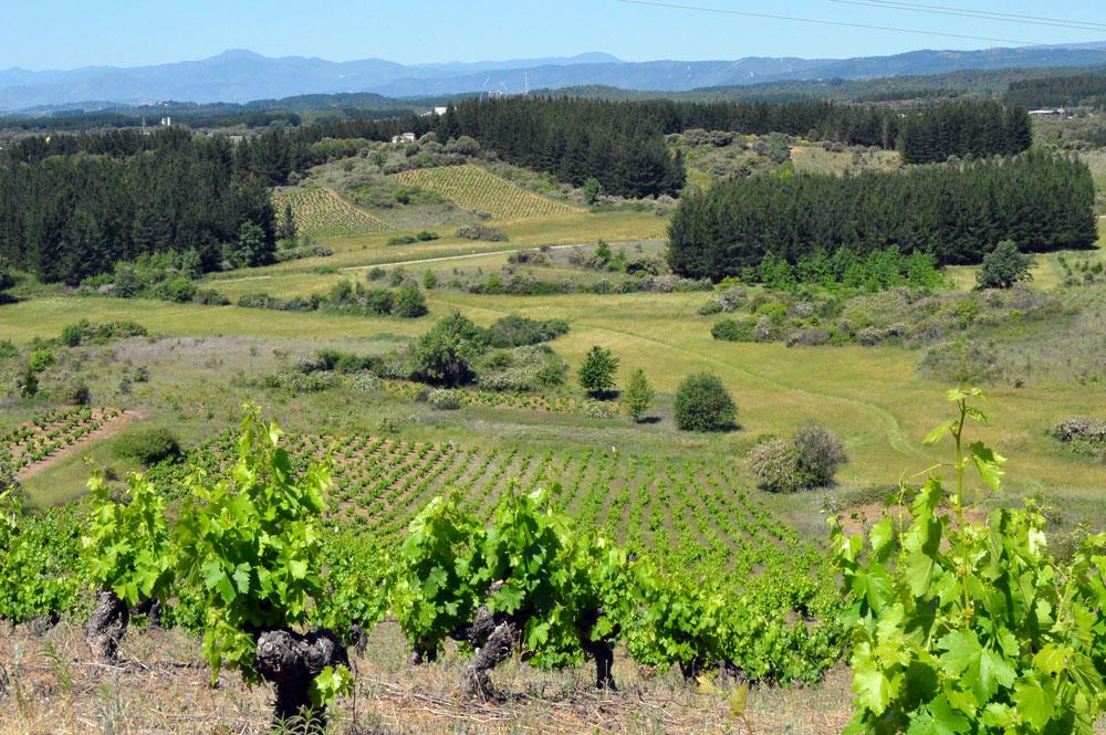 13 viñas alto san esteban